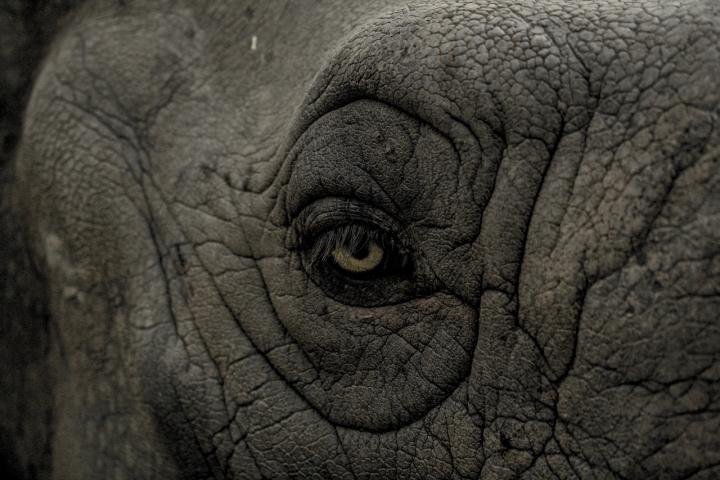 eye wild rhino animal 99575