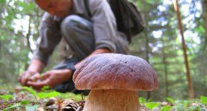 cercatore funghi mortale