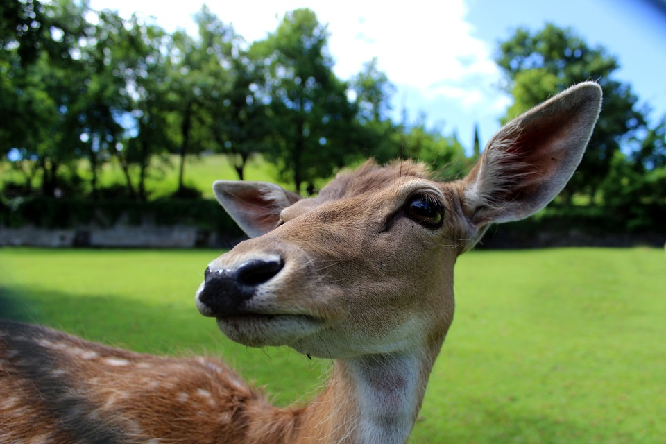 deer 784029 960 720