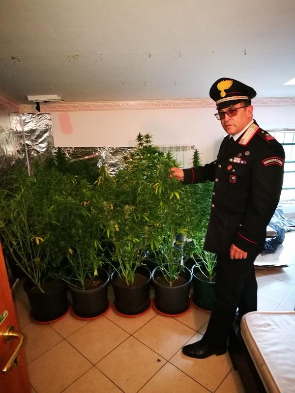 coltivare marijuana in casa