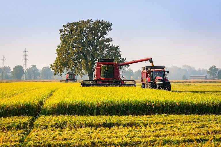 agricoltura riso