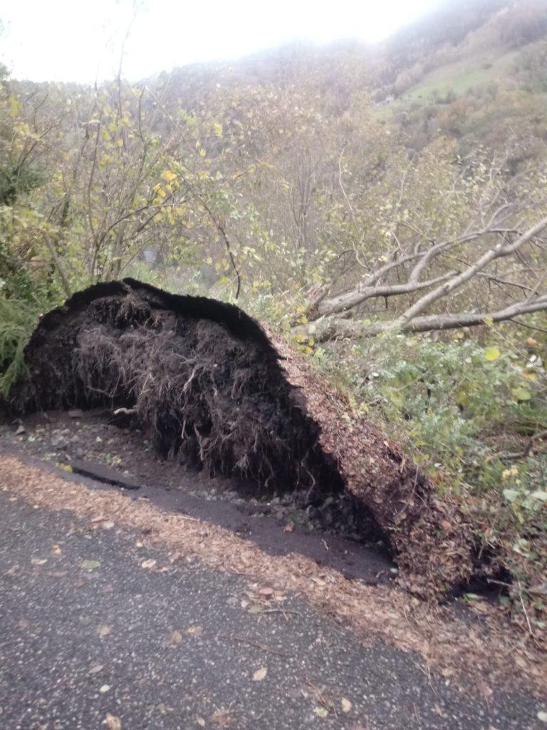 albero divelto maltempo
