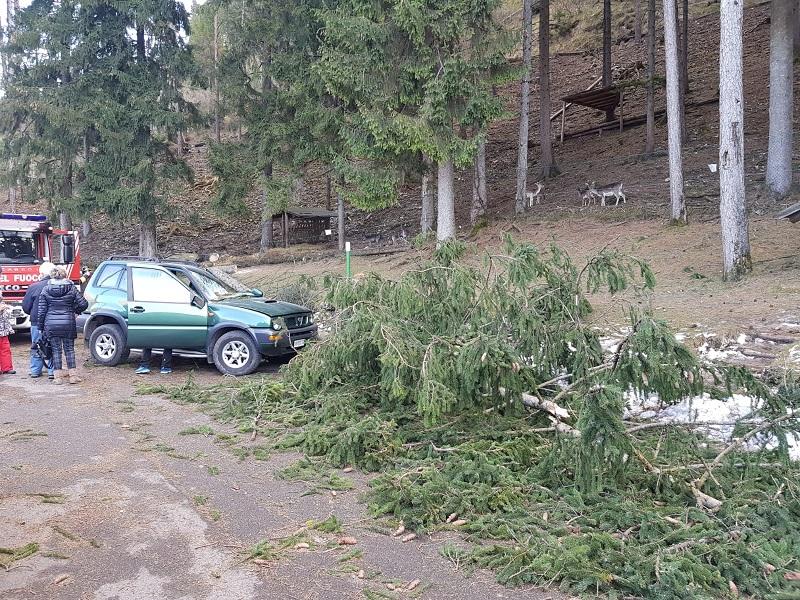 albero caduto vento