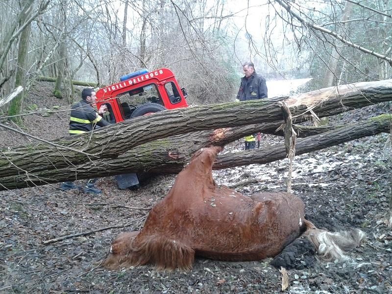 recupero cavallo morto