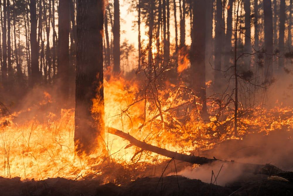 codice arancione incendio boschivo