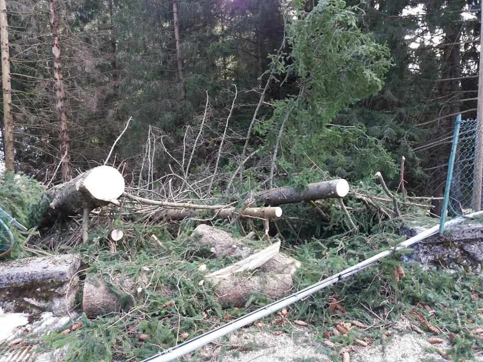 forte vento alberi abbattuti