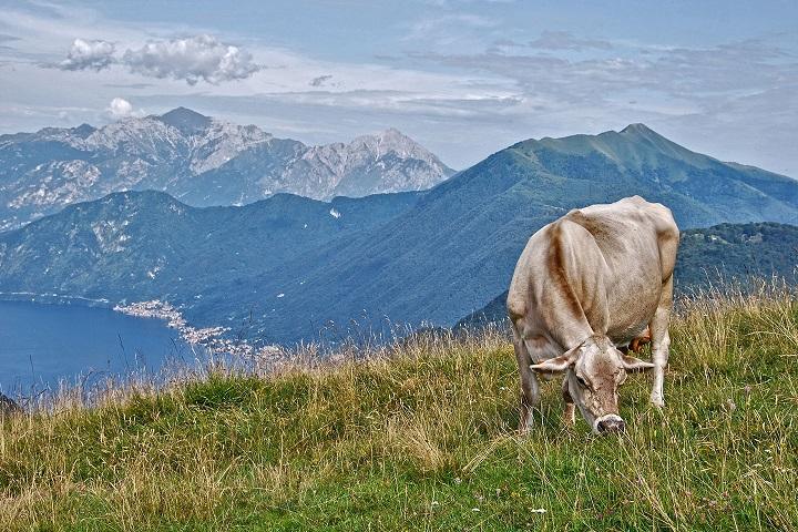 agricoltura di montagna