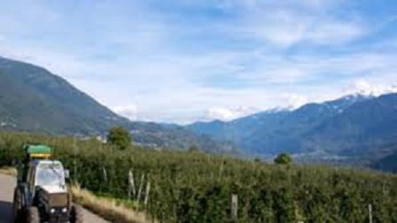 Frutteto Valtellina.jpg