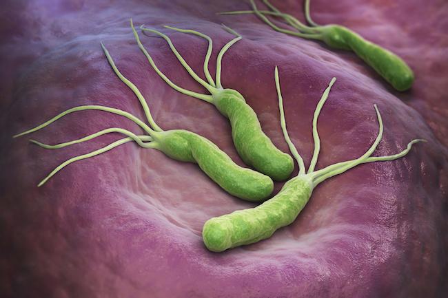 Helicobacter pylori probiotici