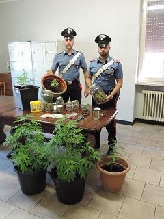CC Orzinuovi Marijuana.jpg