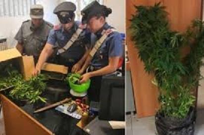 Carabinieri m,arijuana.jpg