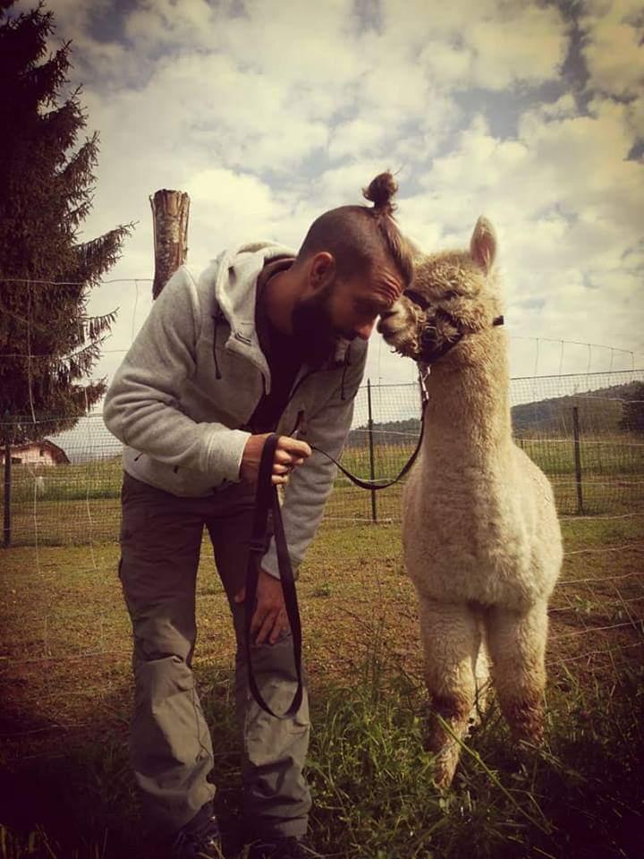 allevamento alpaca bergamo