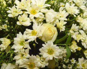 flower 2260053 960 720