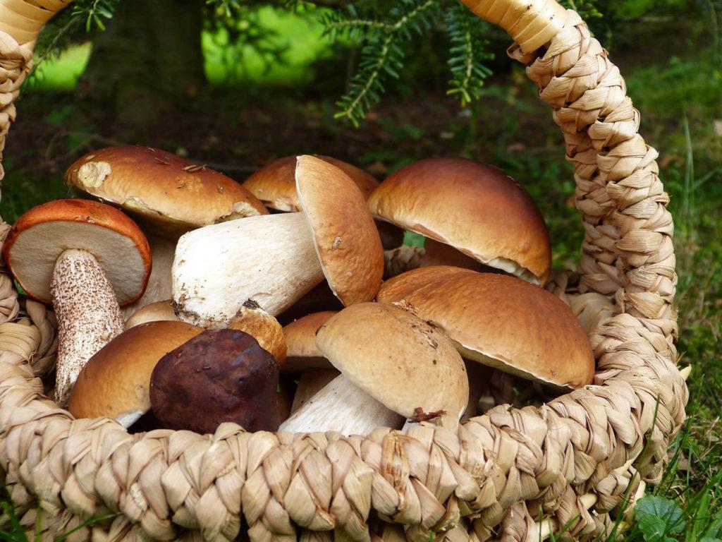 avvelenamento da funghi