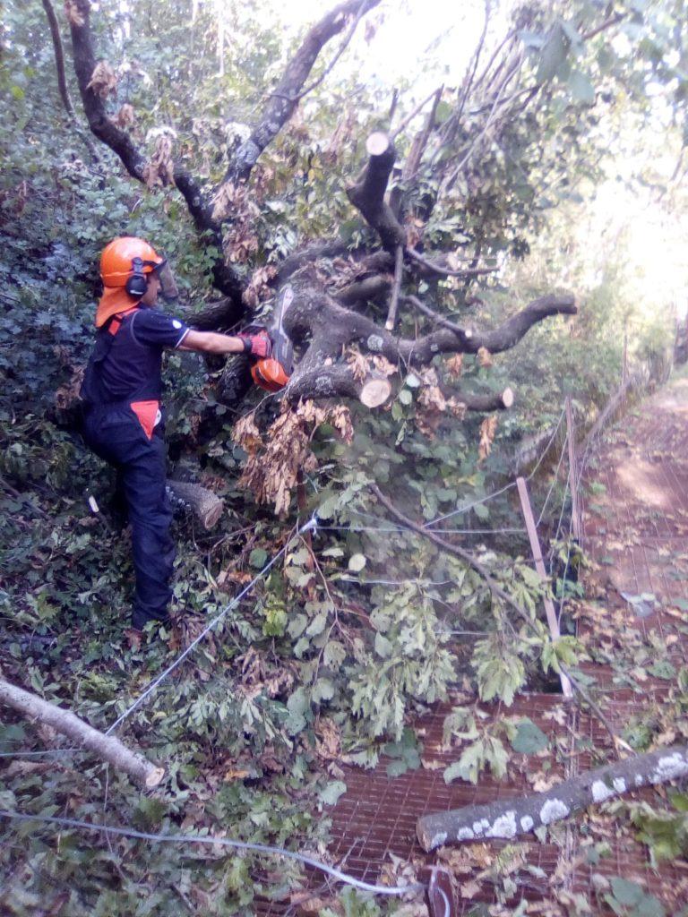 bosco protezione civile soccorso