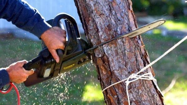 abbattimento alberi 2