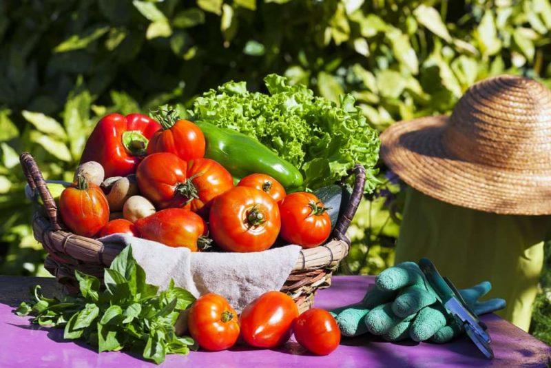verdura scaled