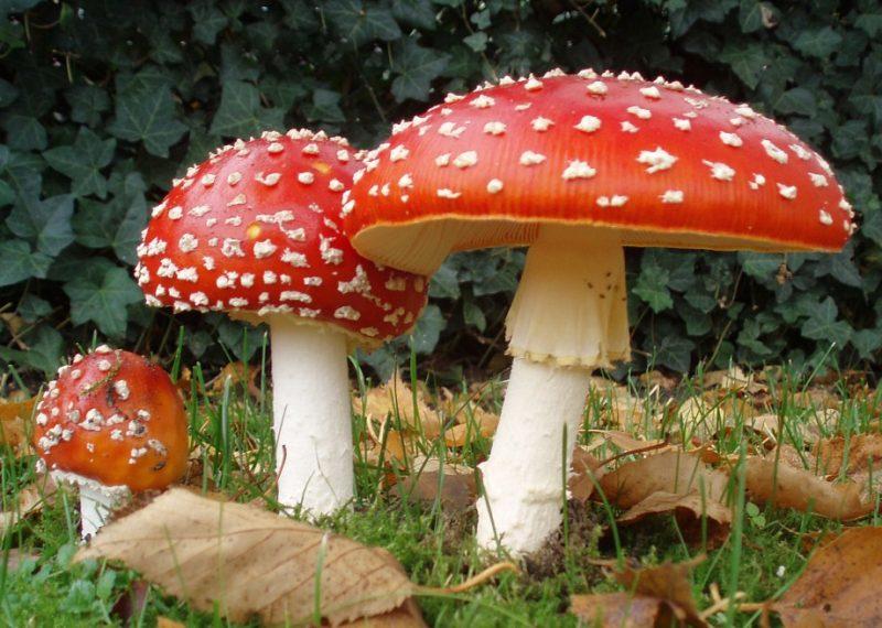 intossicazione da funghi